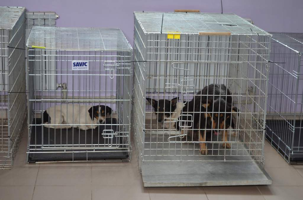 Результати роботи Центру захисту тварин за місяць
