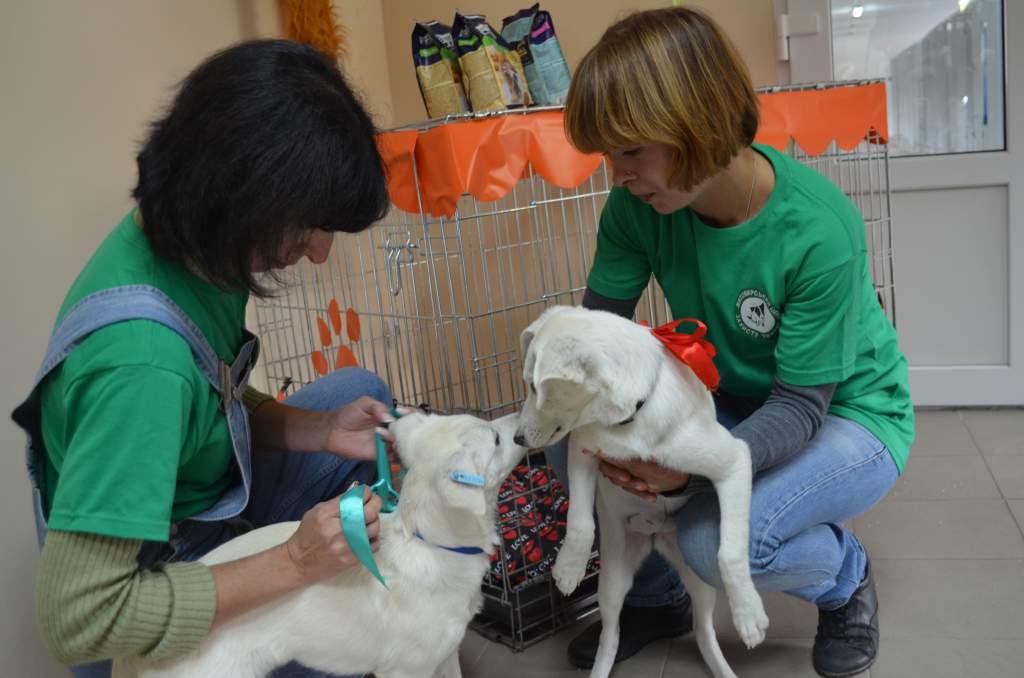 Фоторепортаж з відкриття Житомирського центру захисту тварин