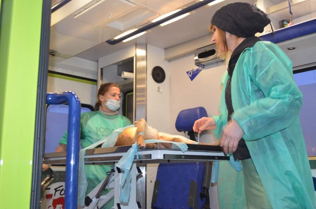 Фонд «Чотири лапи» простерилізує 2000 безпритульних тварин у Житомирі