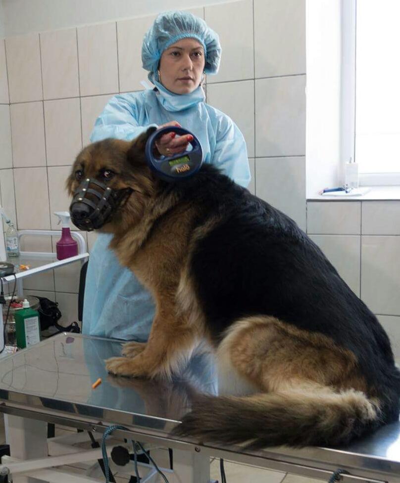 """У КП """"Центр захисту тварин"""" вживили перший мікрочіп безпритульній та власницькій тварині."""