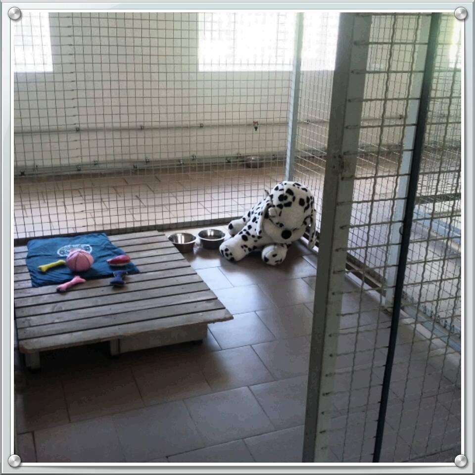 """КП """"Центр захисту тварин"""" надає послуги готелю для домашніх песиків!"""