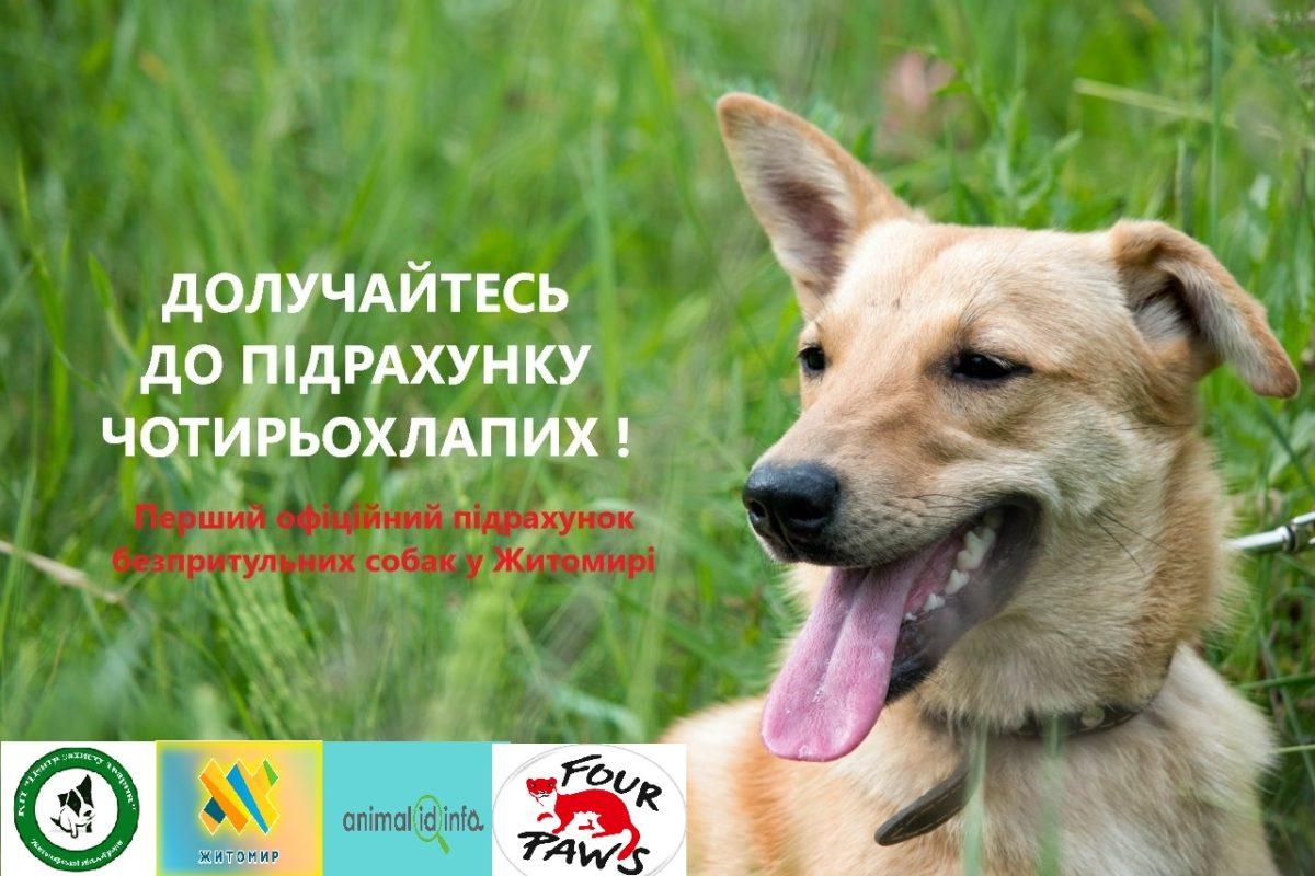 У Житомирі розпочався довгоочікуваний підрахунок безпритульних собак!