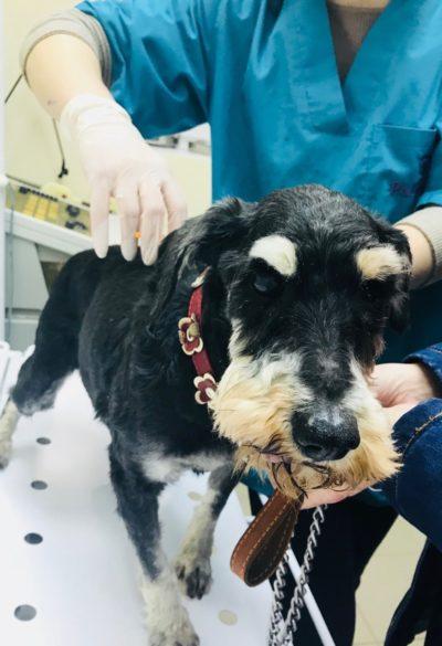У Житомирі продовжується безкоштовне чіпування собак!