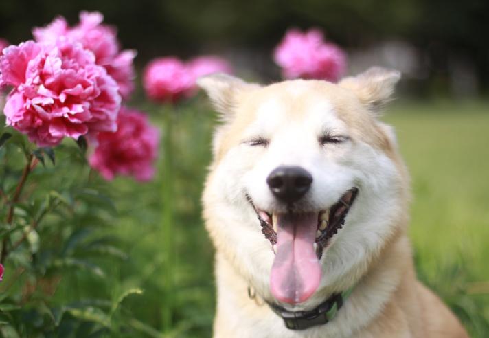 Здорова посмішка домашнього улюбленця – запорука здоров`я усієї родини!