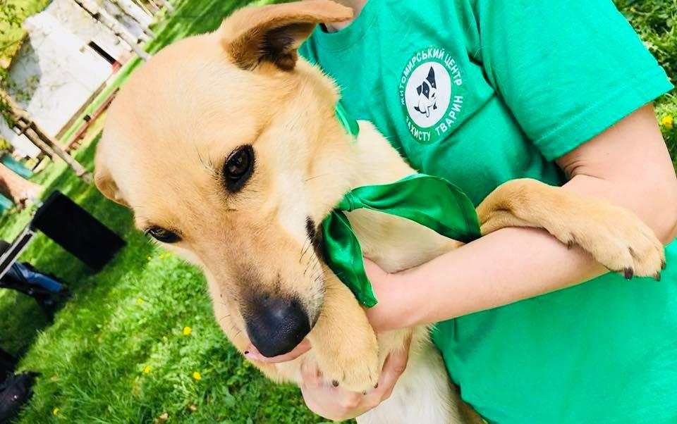У Житомирі відбувся інформаційно-просвітницький захід із адопції безпритульних тварин!