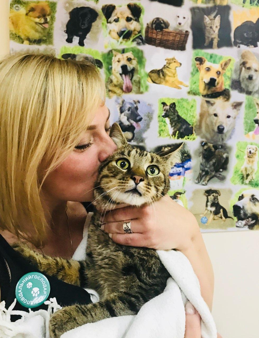 Вакцинація домашніх кішок: примха чи необхідність?