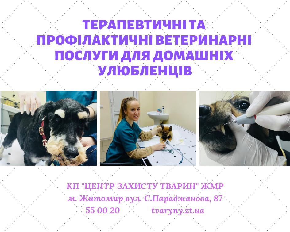 Терапевтичні послуги для домашніх тварин!