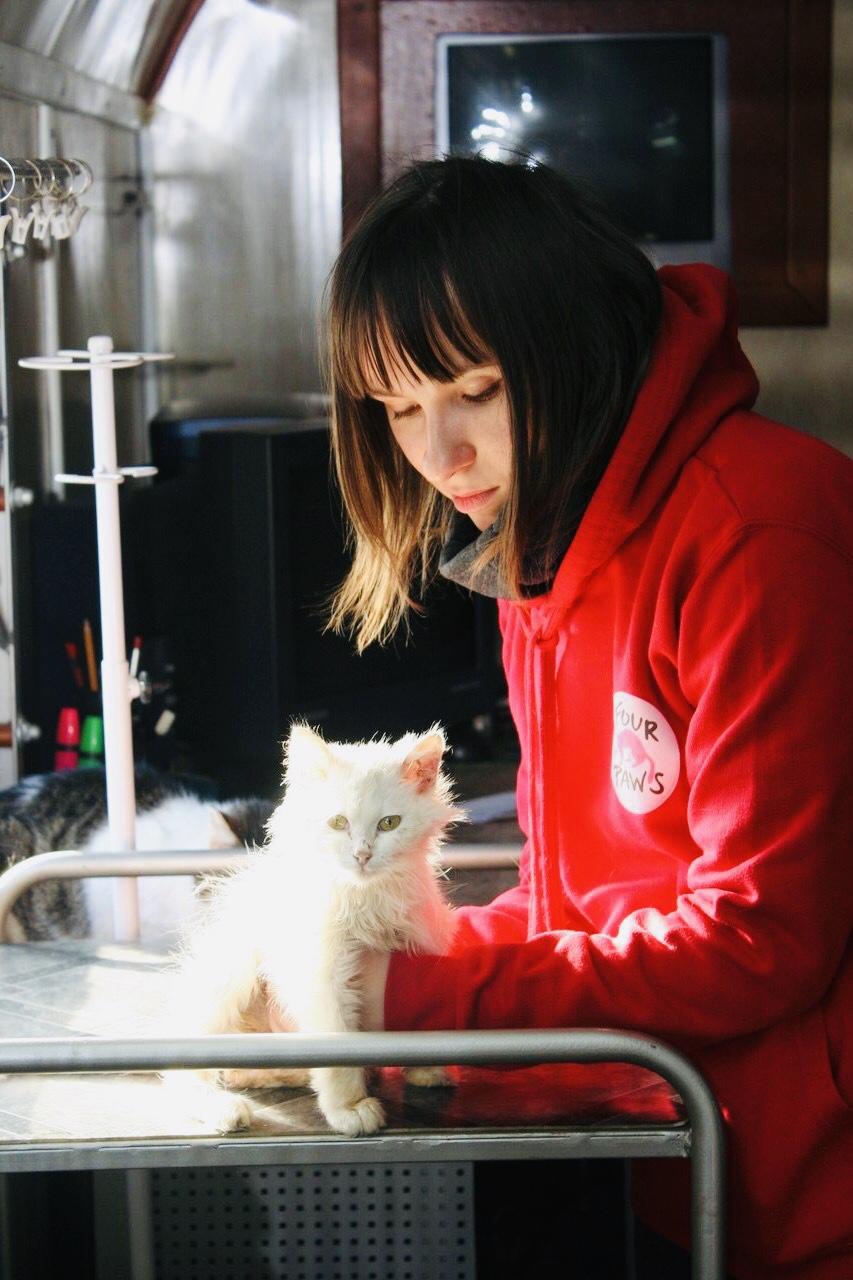 Унікальна акція з безкоштовної стерилізації безпритульних котів та кішок у Житомирі!