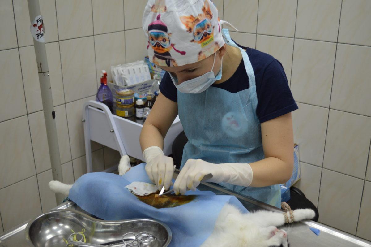 У Житомирі міжнародний фонд FOUR PAWS допоміг стерилізувати вуличних котів