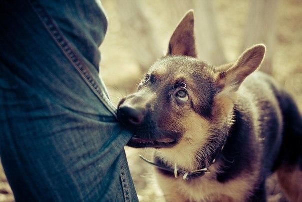 Правила поводження з незнайомими собаками