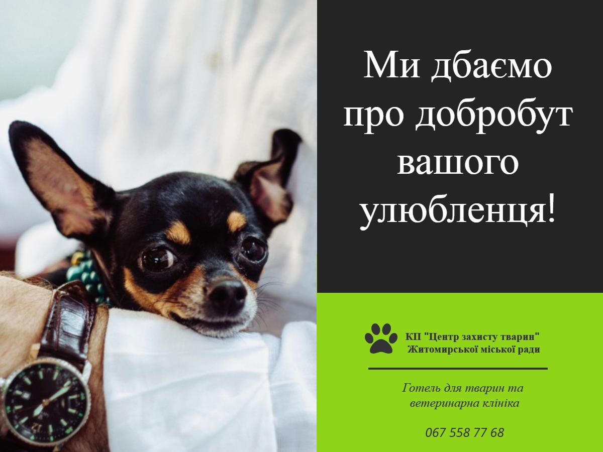Ветеринарна клініка Центру захисту тварин успішно працює!