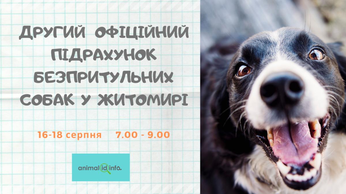 Житомирян запрошують взяти участь у підрахунку вуличних песиків!