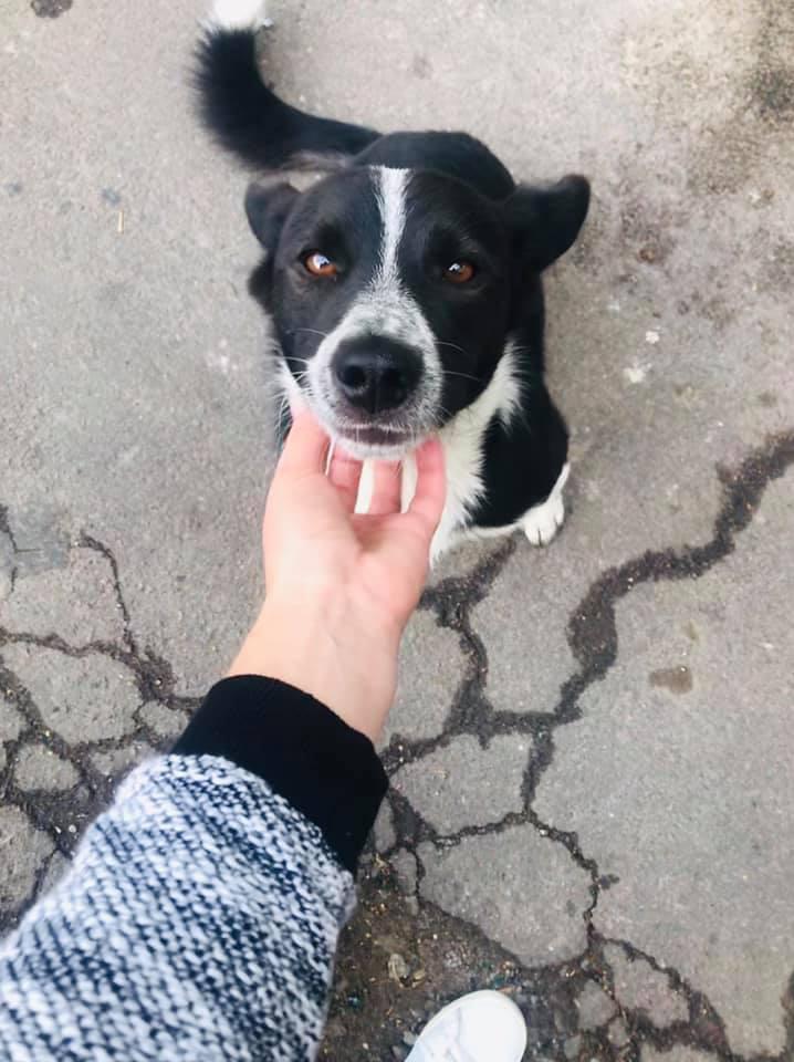 Вдруге у Житомирі успішно підрахували безпритульних собак
