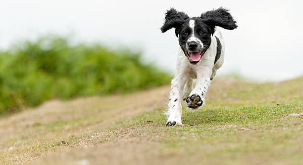 На перший забіг із собаками «Біжу з другом» вже зареєструвалися 50 учасників.