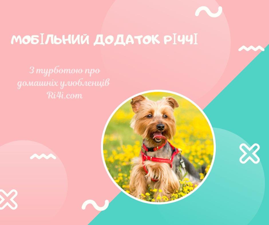 У Житомирі презентували мобільний додаток, який допоможе слідкувати за здоров`ям домашніх тварин.