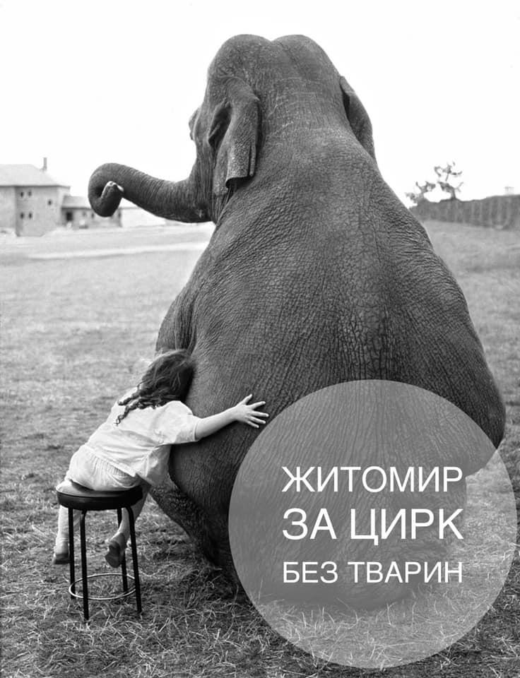 У Житомирі заборонили пересувні цирки.