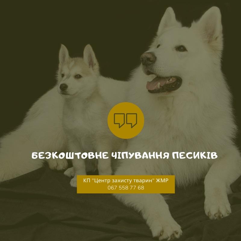 Безкоштовне чіпування домашніх собак. Кількість чіпів обмежена!