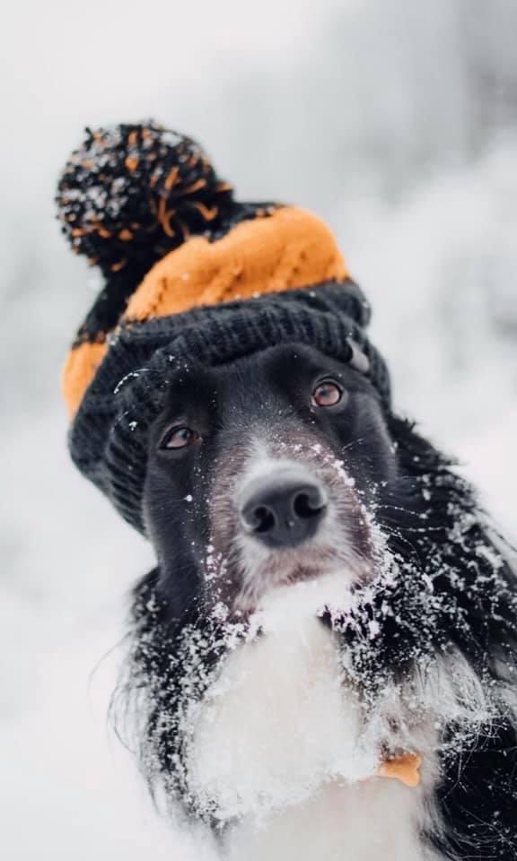 Як правильно вигулювати тварин взимку? Поради господарям.
