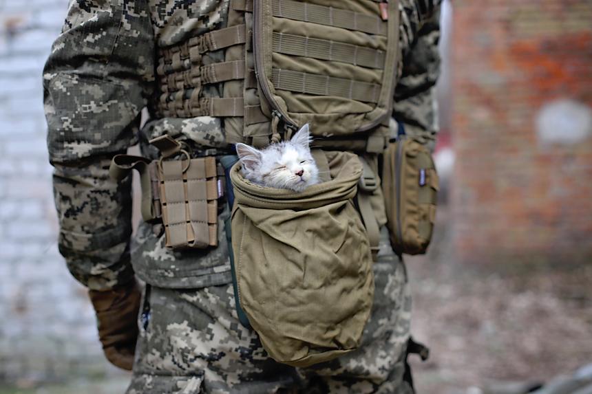 Житомирські військові знялися у фотосесії з підопічними Центру захисту тварин