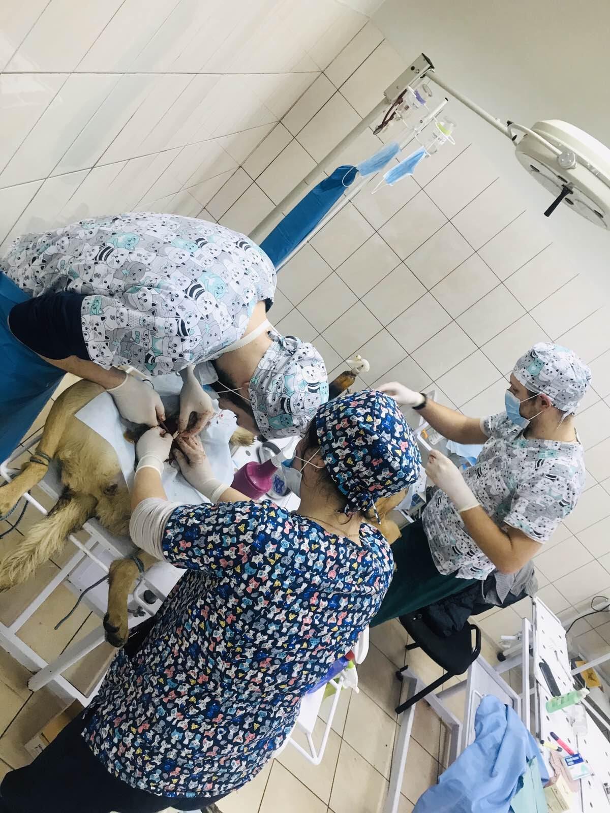 23 лютого – Міжнародний день стерилізації тварин
