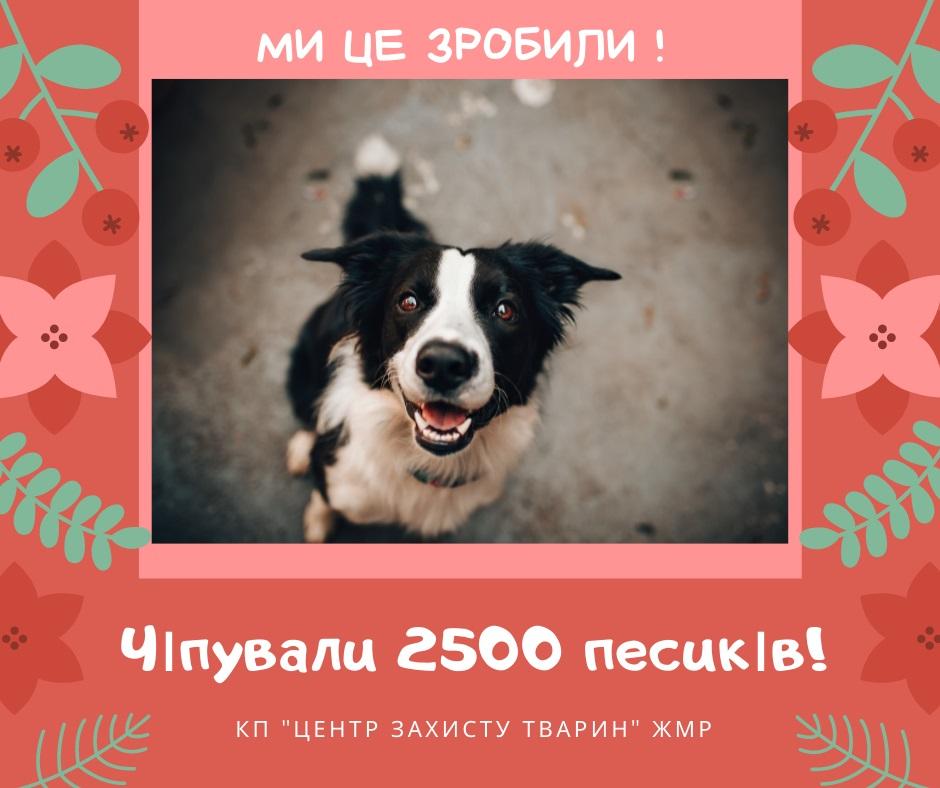 У Житомирі завершили безкоштовне чіпування собак!