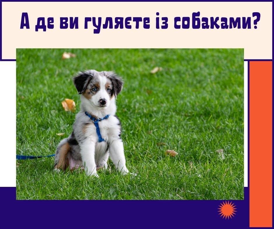 Центр захисту тварин проводить опитування серед власників собак