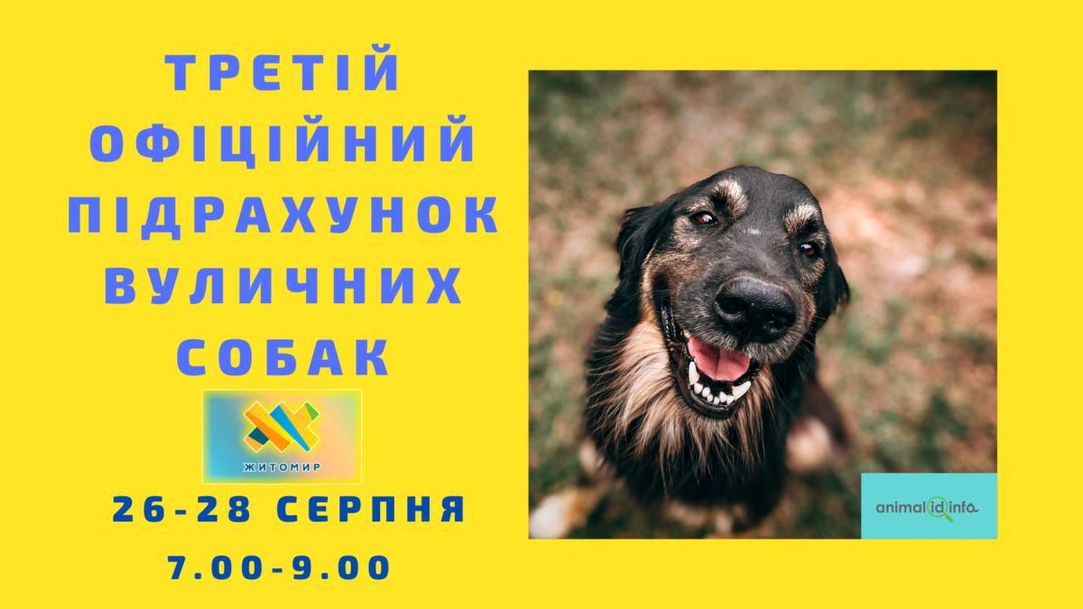 У Житомирі відбудеться третій підрахунок вуличних собак!